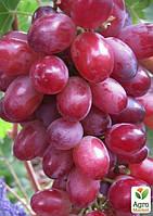 "Виноград ""Красный палец"" (кишмиш)"