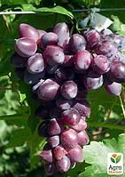 """Виноград """"Абу-Хасан"""""""
