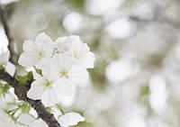 Весна – пора обновления