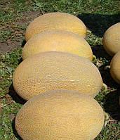 Семена Дыни Мае F1, 500 семян