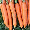Морковь Болеро F1 0,5 гр. IS, фото 2