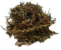 Очанка лекарственная, трава 100 грамм - (herba Euphrasia officinalis)