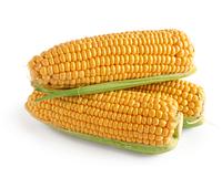 Семена Кукурузы Оверленд F1, 1 кг.