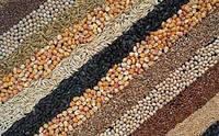 Закупка зерновых, бобовых культур, дорого!!!
