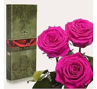 Три долгосвежих розы Малиновый Родолит в подарочной упаковке