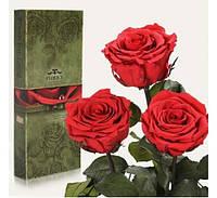 Три долгосвежих розы Алый Рубин в подарочной упаковке,необычные подарки