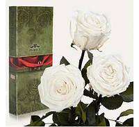 Три долгосвежих розы Белый Бриллиант в подарочной упаковке,подарок девушке