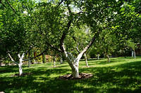 Обрезка деревьев, сада, кустарников. Уход за садом