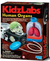 Органы человека, научный набор, 4M