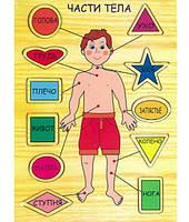 Рамки-вкладыши «Части тела»