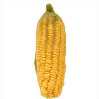 MARKET PLACE - Декоративная кукуруза