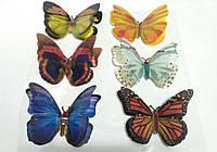 Декоративные бабочки на стену 6шт(липучка) большие