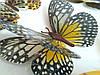 Декоративные бабочки на липучке 6шт большие, фото 3