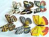 Декоративные бабочки на липучке 6шт большие, фото 2