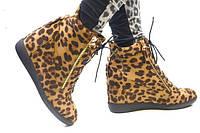 Сникерсы леопардовые Giuseppe Zanotti код 2163