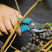 Обрізка винограду Обрізка саду