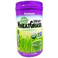 Bluebonnet Nutrition, Супер Земля, органический порошок ростков пшеницы, 11,2 унции (320 г)
