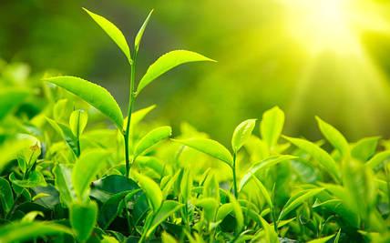Стимулируй растения на урожай: эпин и циркон.