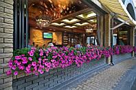 Озеленение летних площадок, террас для кафе, ресторанов и баров.