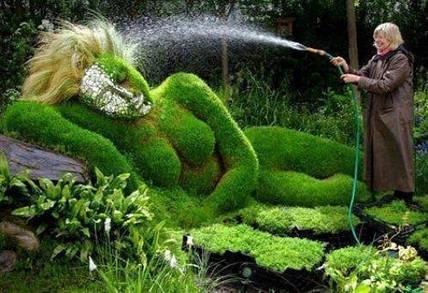 Поливаем огород: как и чем напоить растения