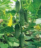 Семена  Огурца  Пасамонте F1, 500 семян