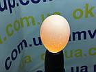 Овоскоп теплуша для всех видов яиц, фото 6