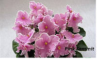 Сенполия Pink Summit(Sorano)