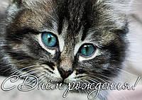 """Картинка вафельная А4 """"Котёнок"""""""