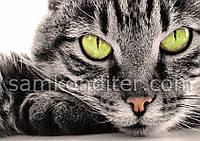 """Картинка вафельная А4 """"Котёнок 2"""""""