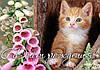"""Картинка вафельная А4 """"Котёнок 3"""""""