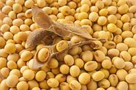 Эксперт назвал главные акценты для аграриев при выборе посевного материала сои