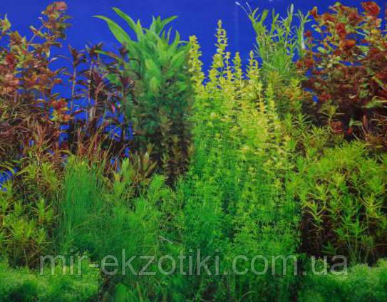 Фон для аквариума односторонний 30см арт.9033