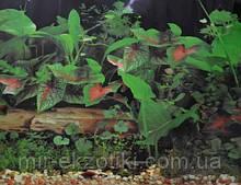 Фон для аквариума односторонний 40см арт.9013