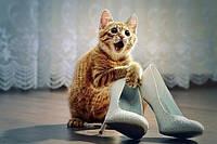 Стерилизация кошки - 500 грн.