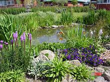 Растения прибрежной зоны для водоема