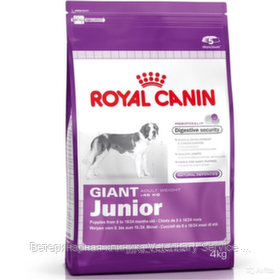 Giant Junior (4 kg)
