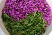 Иван-чай (Кипрей)  карпатский,чай от 100 болезней