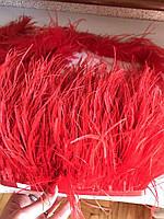 Перьевая тесьма из перьев лебедя.Цвет алый.Цена за 0,5м