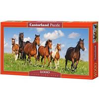 Пазлы Castorland Лошади С-400034, 4000 элементов