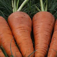 Санта Круз F1 (Santa Cruz F1) семена моркови Seminis 200 000 семян