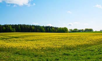 Эксперты назвали самую выгодную для выращивания в Украине культуру