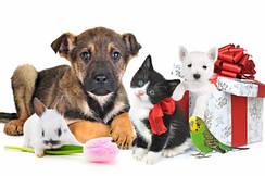 Товары для животных, зоотовары