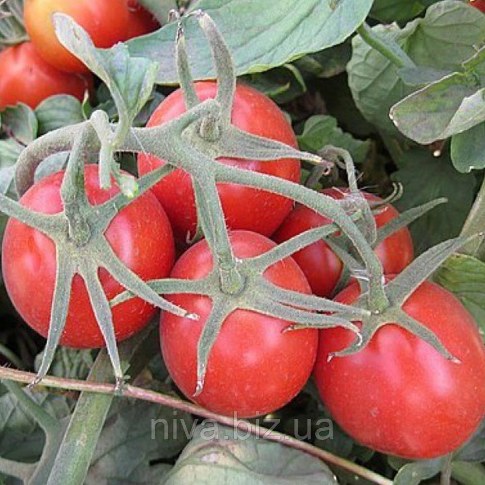 2040 F1 семена томата дет. Lark Seeds 10 000 семян