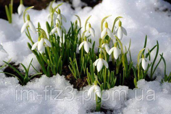 Весна не за горами!!