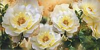 Фотообои на плотной бумаге:ЧАЙНАЯ РОЗА № 31 изделие (ширина 392 см высота 204 см) из 12 листов