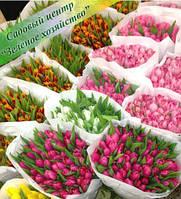 Тюльпаны к празднику и цветы к 8 Марта, оптом, питомник, Киев, Украина
