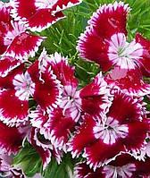 Семена гвоздики махровая Турецкая 0,5 г