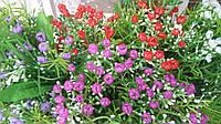 Букеты пластиковых цветов в-31 см 7 веток (20 шт, разные цвета)