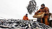 В Украине появится электронный сертификат происхождения рыбы: подробности нововведения