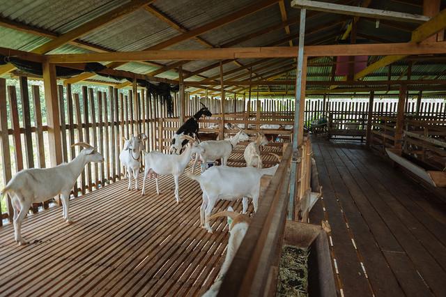 В Украине появится новая козья ферма и уникальный сырзавод